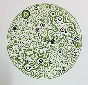 Ellen-groen
